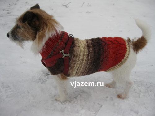 схема свитер для собаки спицами техника и схема вязания спицами