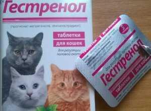 контрасекс для кошек инструкция