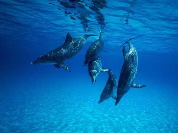 Секс акул дельфинов касаток китов