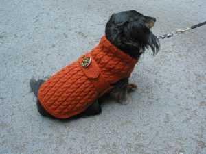 связать собаку спицами описание вяжем сами модный гардероб для собак
