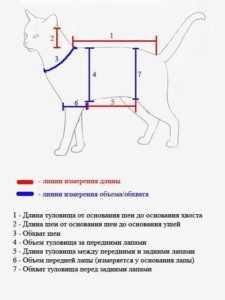 Костюм для кошки своими руками выкройки 22